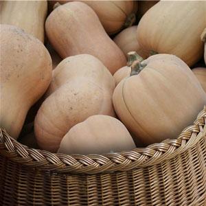 butternut vente directe locale