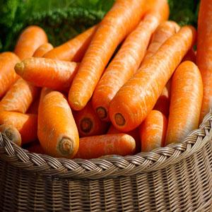 carottes vente directe locale