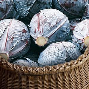 choux-rouges vente directe locale