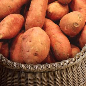 patate-douce vente directe locale