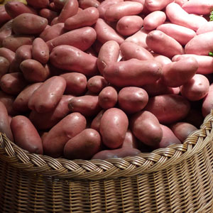 pomme de terre-rouges vente directe locale