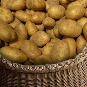 pomme de terre-soupe-frite vente directe locale