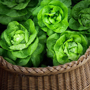 salade vente directe locale